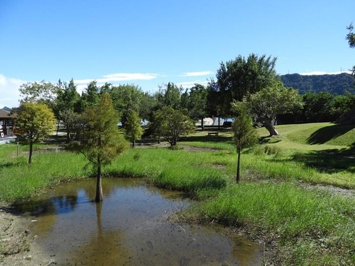 小水塘與小水杉