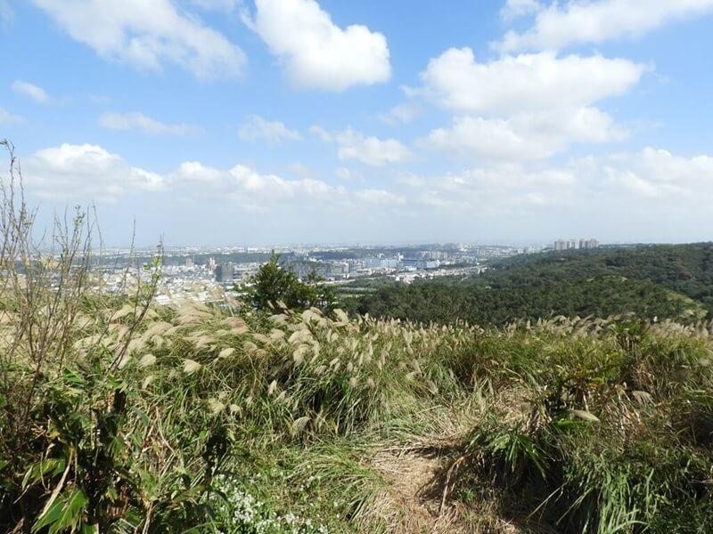 山上的風景與芒草花