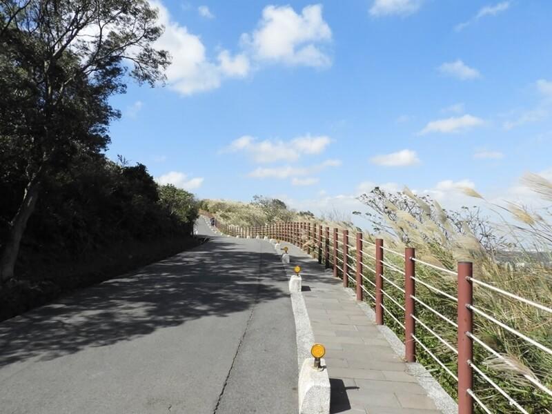 藍天下的道路與芒草花很讚