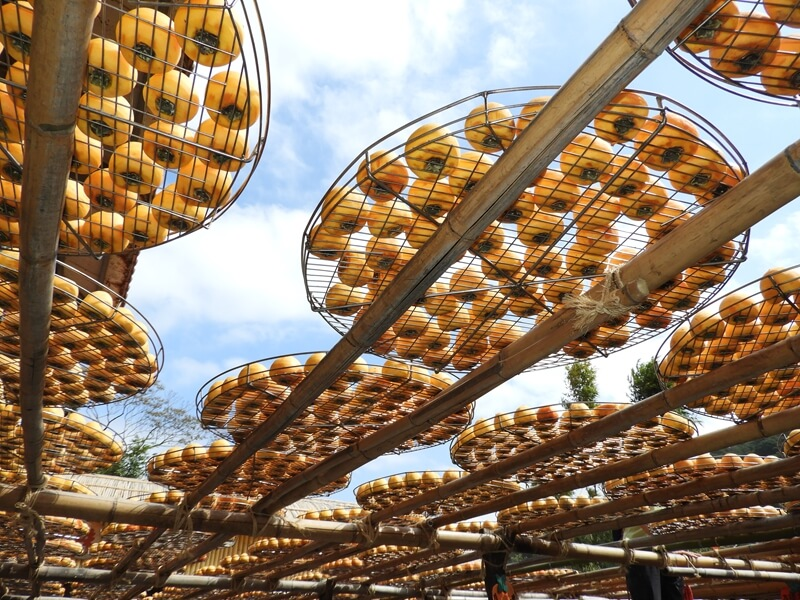 用竹子搭建的曬柿餅架