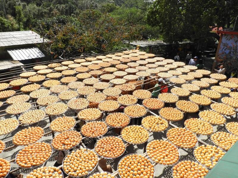 從二樓拍攝的曬柿餅場