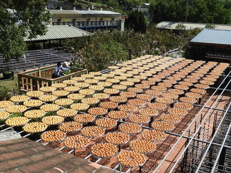 金漢杮餅教育農園的曬柿子場