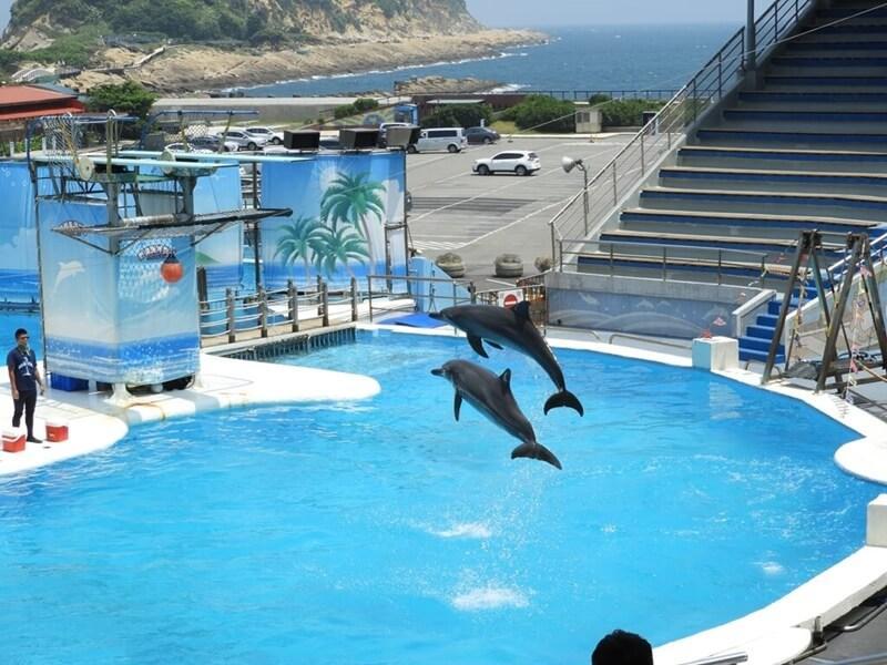 兩隻海豚跳出水面超震撼