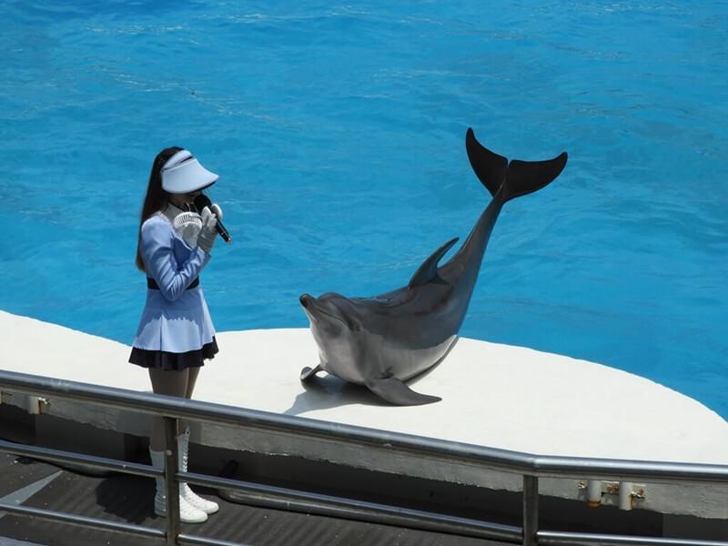 主持人與海豚
