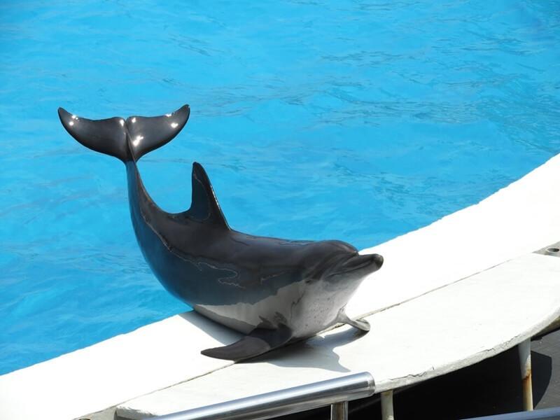 海豚會自己跳到岸上展示耶 !