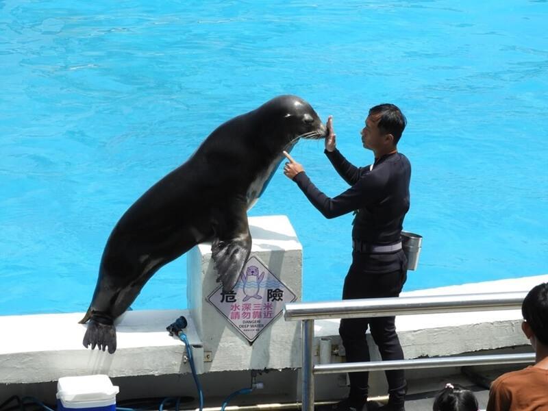 野柳海洋世界的海獅表演