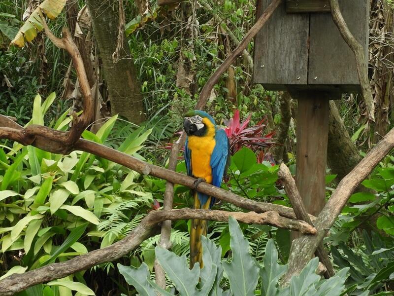 新竹綠世界生態農場的金剛鸚鵡