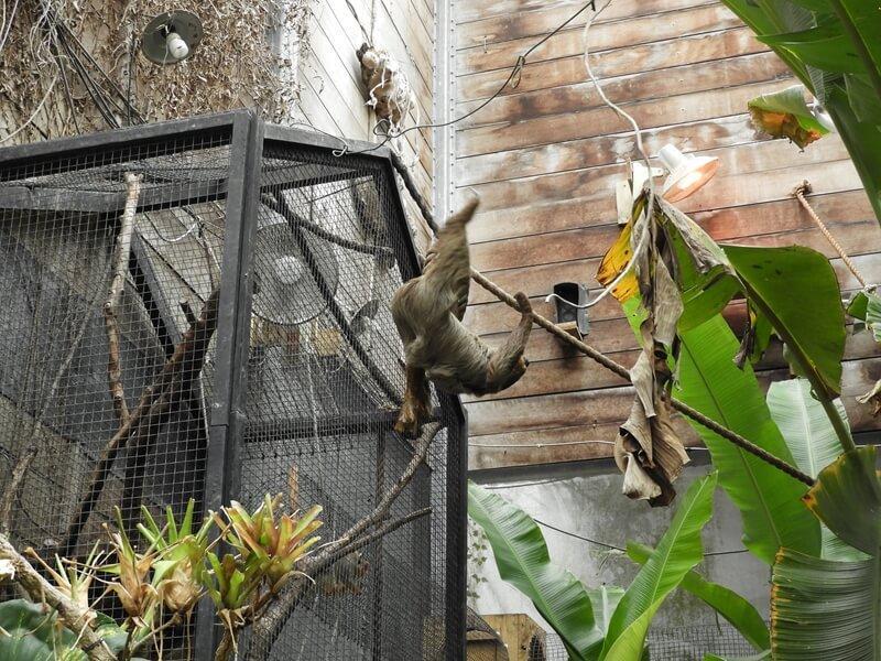 新竹綠世界生態農場有養樹懶