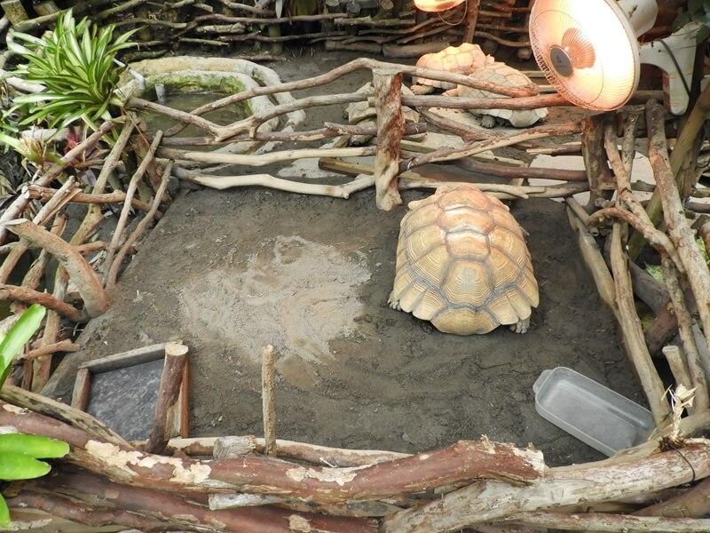 正在睡覺的象龜