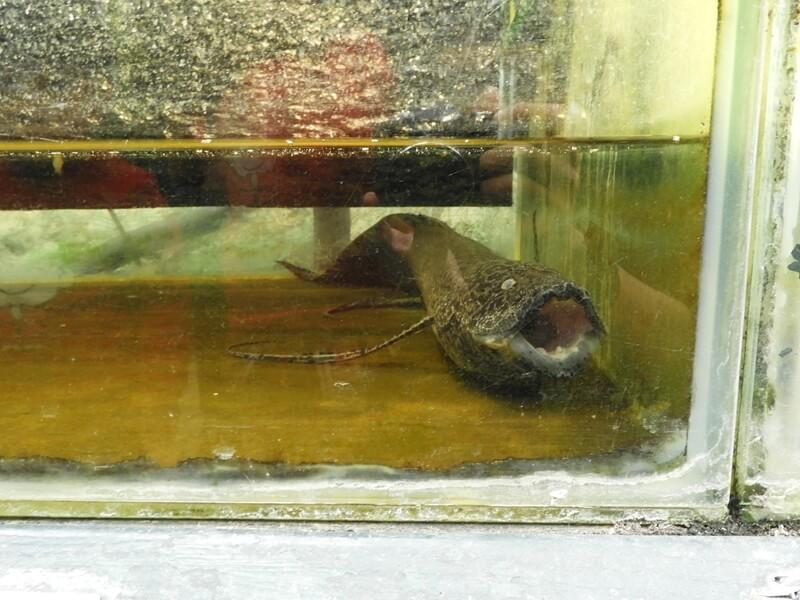 這隻魚長得真的有點怪