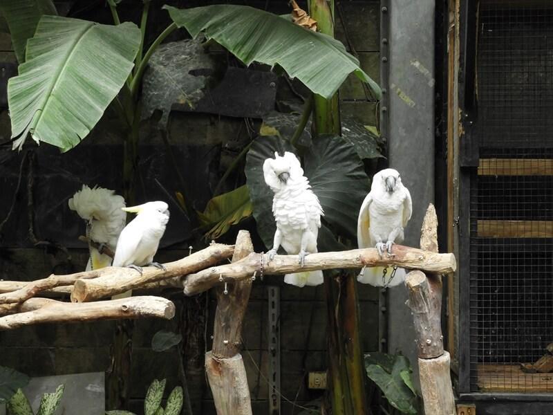 不同品種的鸚鵡也很多